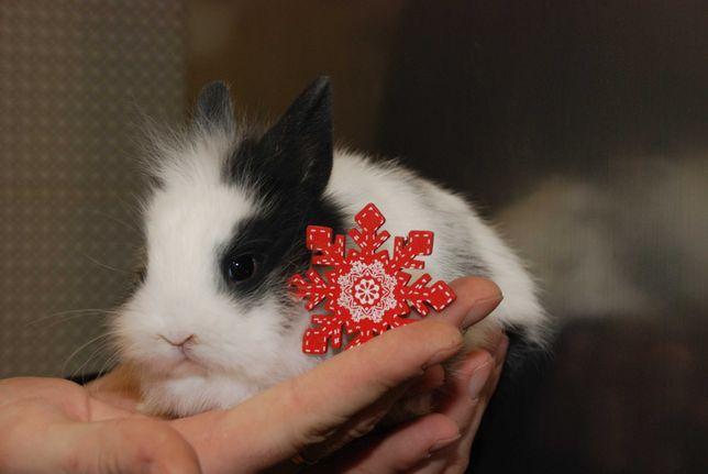 Зайчики-красавчики для любимих и родных, кролик декоративный