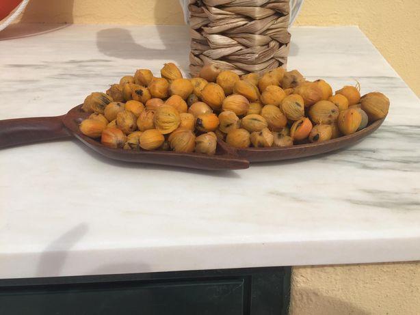 Coqueiro Jerivá semente ( Syagrus Romanzofiana ou Arecastrum )