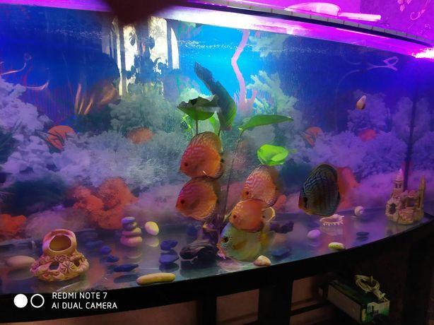 Аквариум с рыбками на 500л.