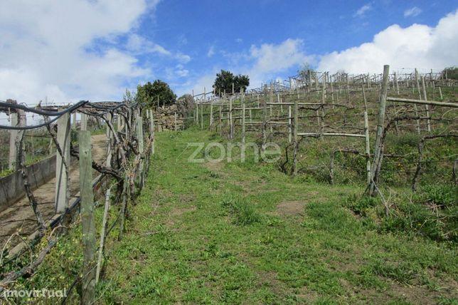 Terreno Vinicultura Com Moradia, 3,5 Ha, Em Melgaço, Rota Dos Vinho...