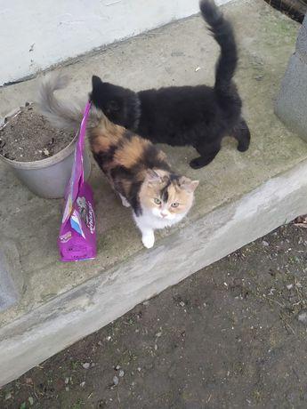 Кіт і кицька безкоштовно