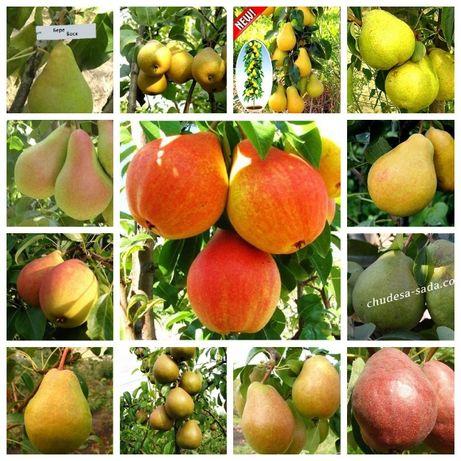 Саженцы яблони груши большой ассортимент сортов опт и розница Качество