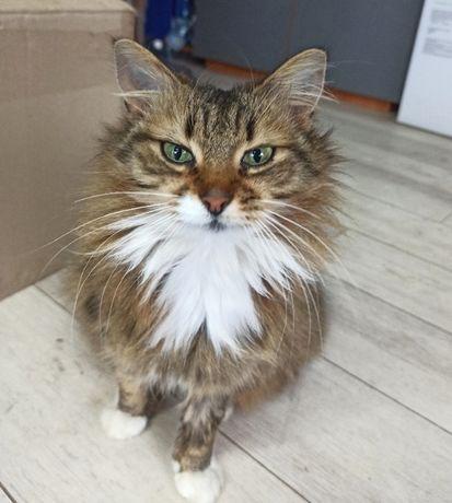 Шикарная ласковая кошка 1 год стерилизована