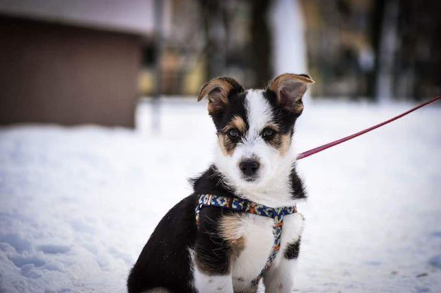 Cześć, jestem Olo i czekam na dom!