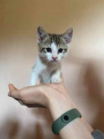 EDZIU kotek do adopcji /BARLINEK