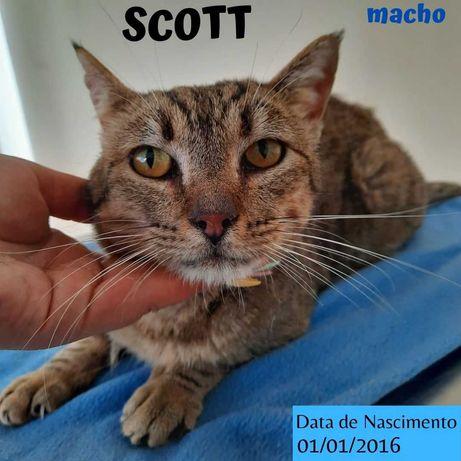 Gato Para Adoção (Scott)
