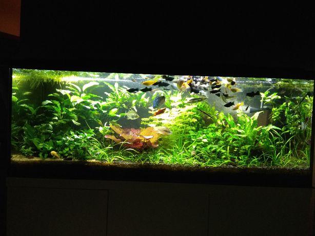 ryby, rośliny, krewetki, ślimaki na narzędzia garaż / ogród