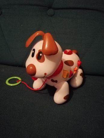 Grający pies