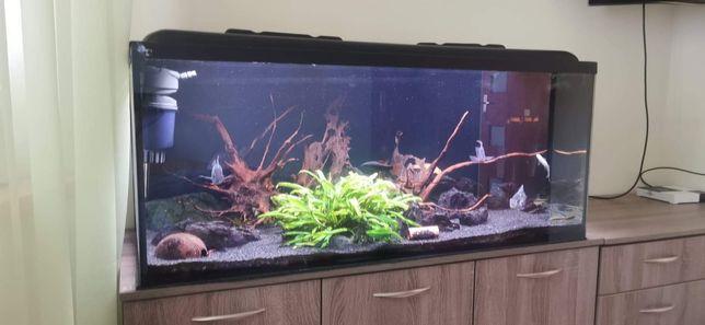 Akwarium 300l + szafka + wyposażenie + życie