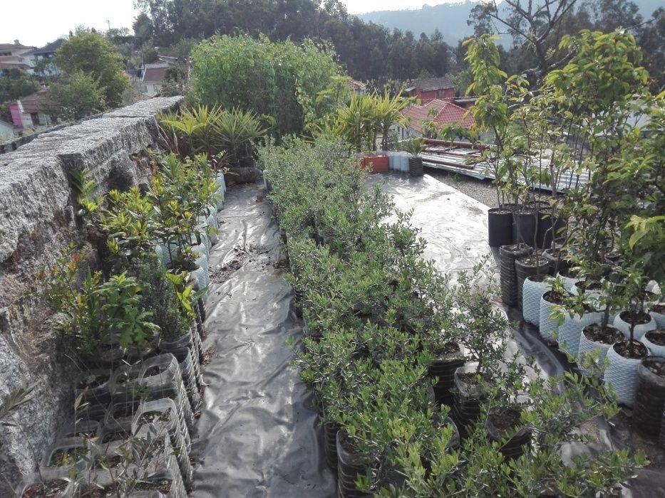 Plantas Fafe - imagem 1