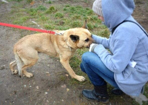 Niezwykły pies szuka niezwykłego człowieka Oldi