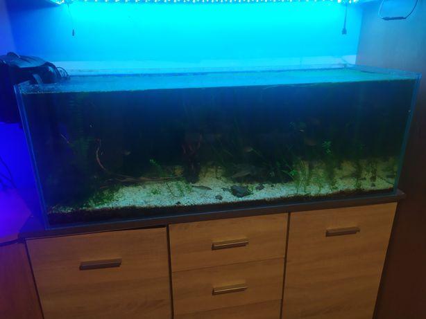 Sprzedam Akwarium 176L