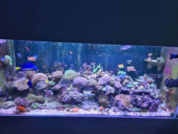 Koralowce akwarium morskie, żywa skała