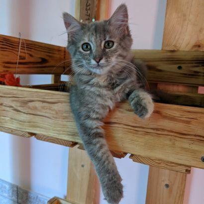 Пушистая прелесть Сима ищет хозяина котенок котята кошеня кот кошка