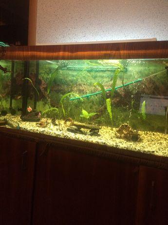 Продам аквариум с оборудованием 160л
