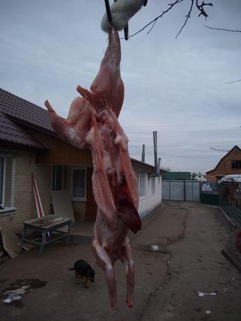 Продам м'ясо кролів