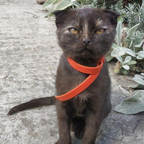 Котик, киця, мурка, мачка, котеня, кішечка.