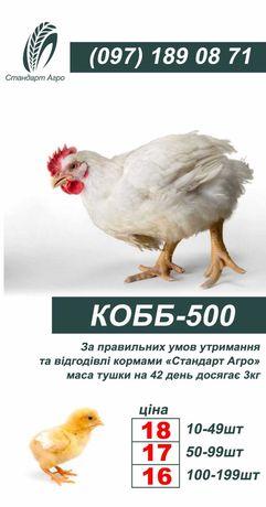 Бройлер КОББ 500 на 28-29 октября