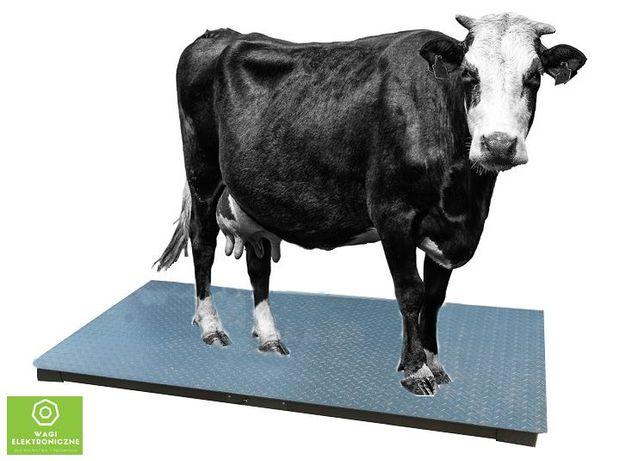 Waga do bydła platforma 1,20X2,20 do Krów świń BYKA TRANSPORT SOLIDNA