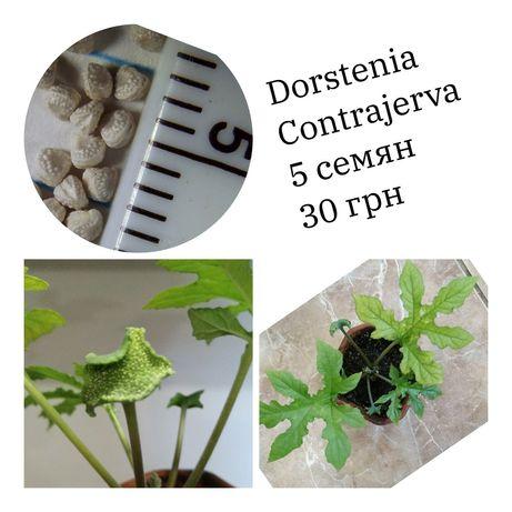 Семена минимальный набор домашнего опыления