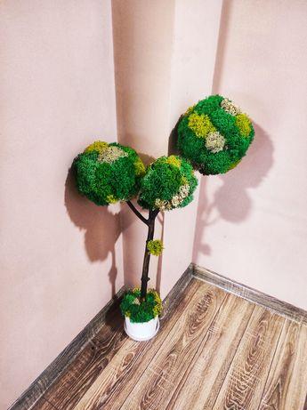 Дерево из стабилизированого мха Мох ягель