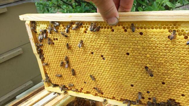 Odkłady pszczele ramka Wielkopolska 18