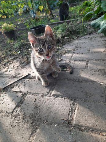 Przesłodkie Kociaki Szukają Człowieka Do Miziania I Kochania