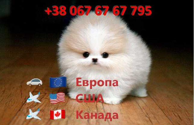 Перевозка животных в Европу, США, Канаду