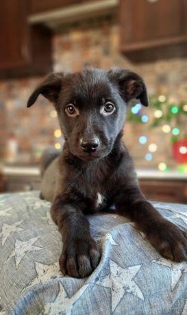 Черный щенок мальчик бесплатно 2, 5 месяца