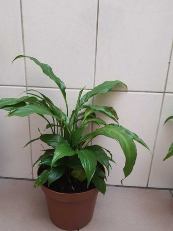 Plantas de interior e catos