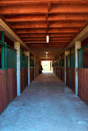 Pensjonat dla koni dąbrówka