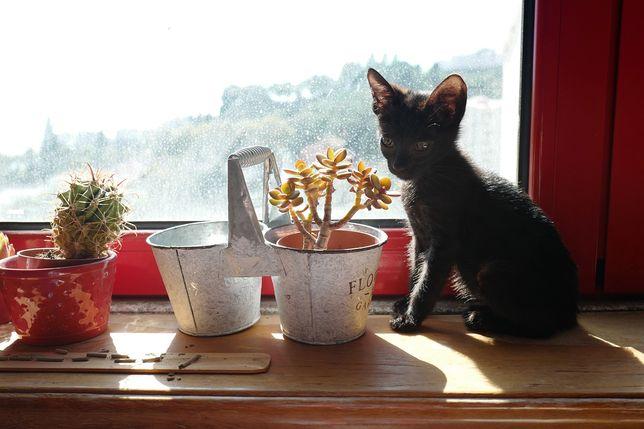 Donatella - gata para adoção