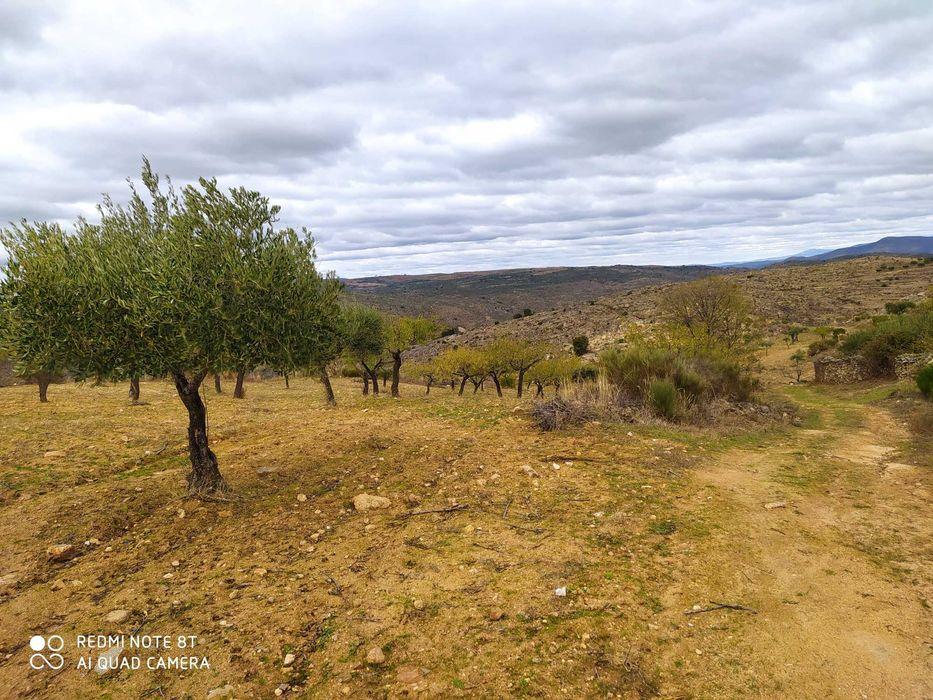 Venda de terreno olival e amendoal Pinhel - imagem 1