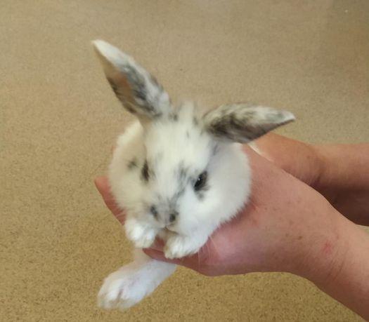 Продаются декоративные кролики.