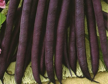 Fasolka tyczna Blauhilde - nasiona
