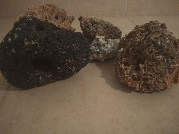 Kamienie wapienne i kolarowce