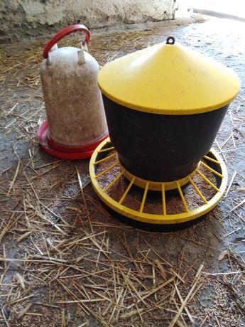 Poidło, karmnik dla kur