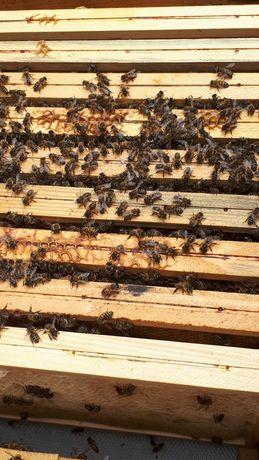 Odkłady pszczele pszczoły ule wielkopolskie