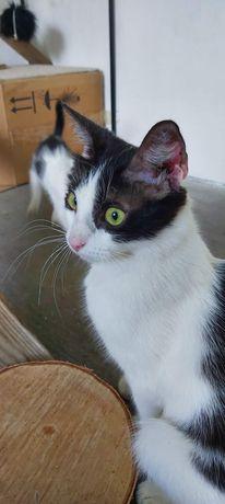 Koteczka do adopcji.