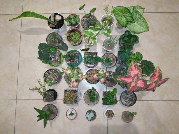Комнатные цветы за символическую цену