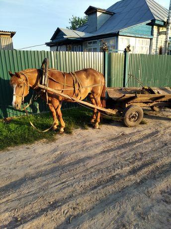 Робоча кобила