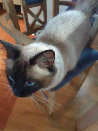Kot, kotek w Wasilkowie zaginął