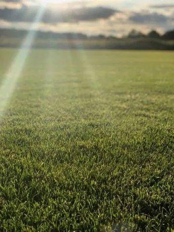 Trawa z Rolki | Trawnik