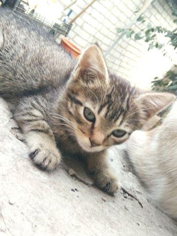 Кошечка полосатик в хорошие руки