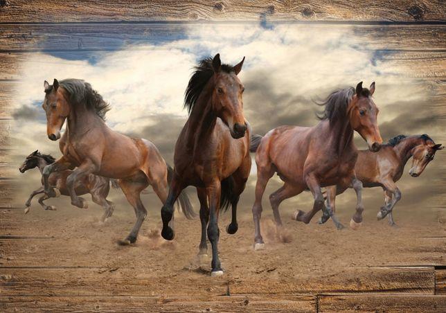 Fototapeta tapeta konie deska 312 x 219cm