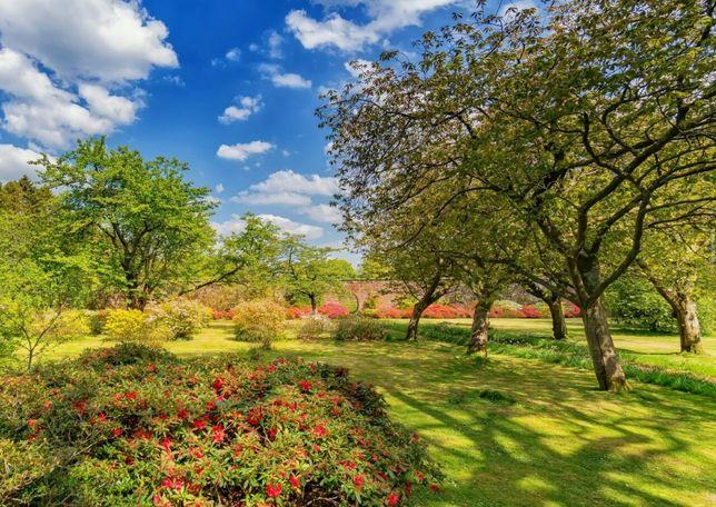 Usługi ogrodnicze / wycinka drzew / koszenie traw / wywóz