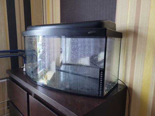 Akwarium kompletne 60l