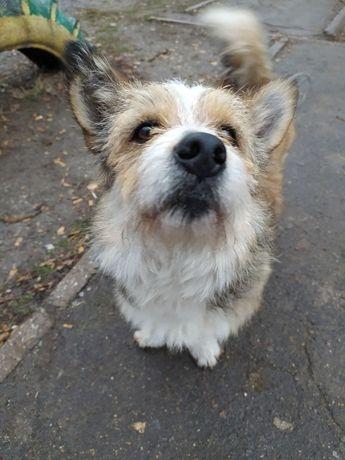 Симпатичный молодой песик - собака для души