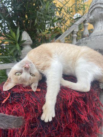 Dou gatinhos , são carinhosos adopçao responsavel