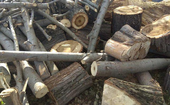 Продам дрова тополя